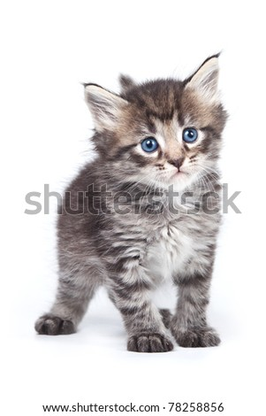Little kitten in pink background