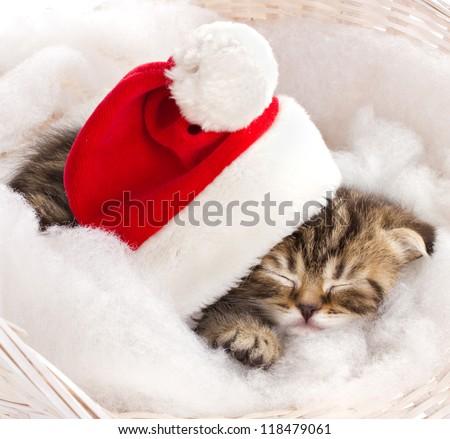 little kitten in red cap of santa sleeping on furry mat in basket - stock photo