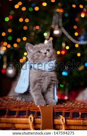Little kitten in scarf - stock photo