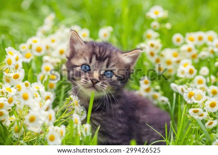 Little kitten in the camomile flowers - stock photo