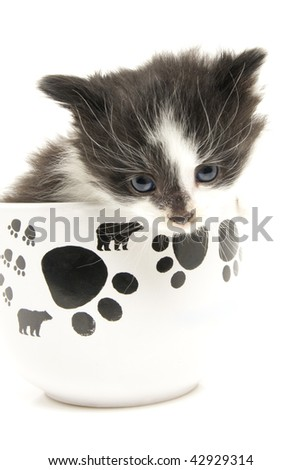 Little kitten in the cup. Isolated.