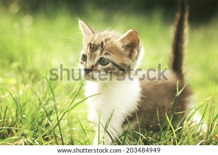 Little kitten in the outdoors - stock photo
