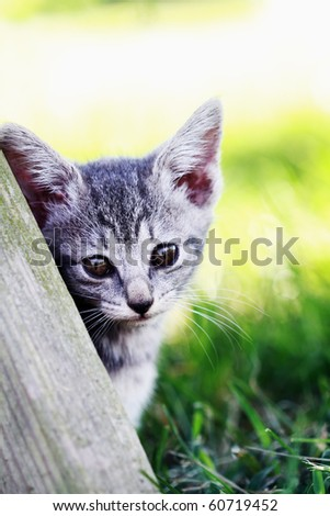Little kitten leans against an old picnic table and making eye contact. Shallow DOF with selective focus on kittens face. - stock photo