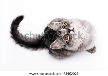 Little kitten. Look through my portfolio to find more images of the same series - stock photo