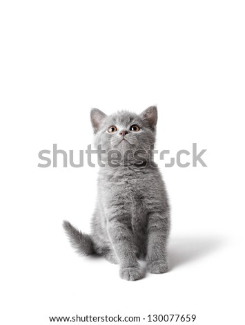 Little kitten looking up. - stock photo