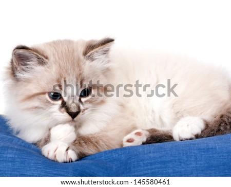 little kitten lying on blue cloth - stock photo
