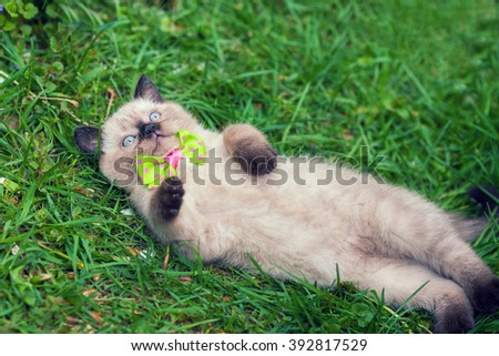 Little kitten lying on the back in grass and basking in the sun - stock photo