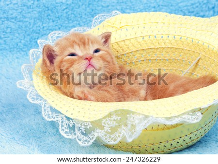Little kitten lying on the back in the straw hat - stock photo