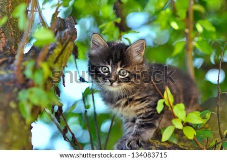 little kitten on a tree - stock photo