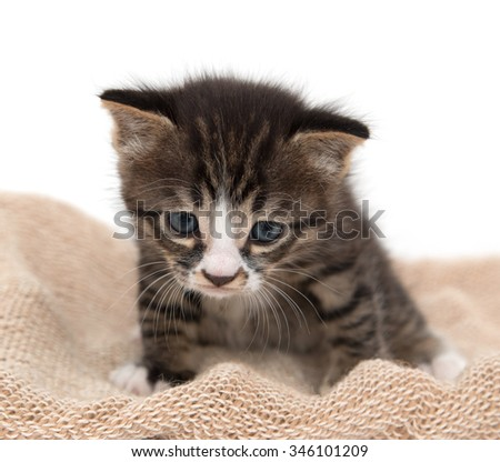 little kitten on a white background - stock photo