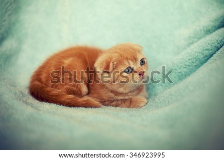 Little kitten on green blanket - stock photo