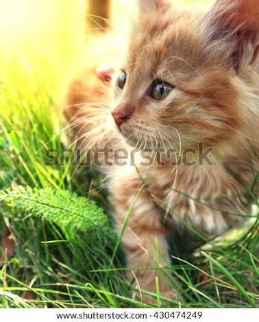 little kitten on green grass - stock photo