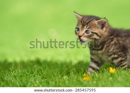Little kitten on the grass - stock photo