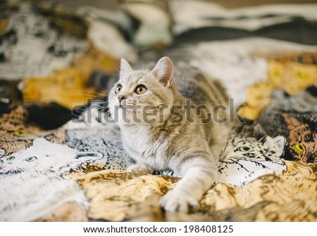 little kitten on the kitty tapestry - stock photo
