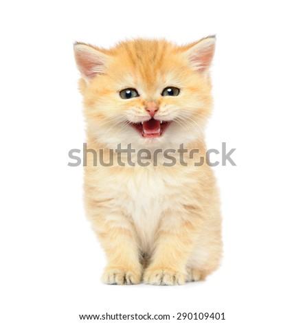 Little kitten on white background - stock photo