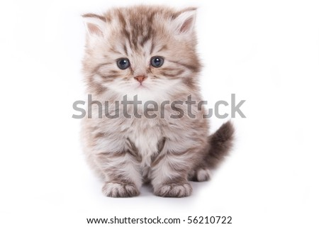 Little kitten on white background - stock photo