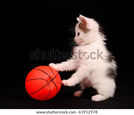 little kitten play with a basketball ball - stock photo