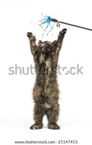 Little kitten playing and look on the top - stock photo