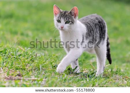 little kitten playing on the grass Cat's child - stock photo