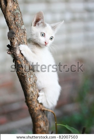 little kitten playing on the tree close up - stock photo