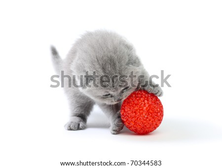 Little kitten playing with ball at white background - stock photo