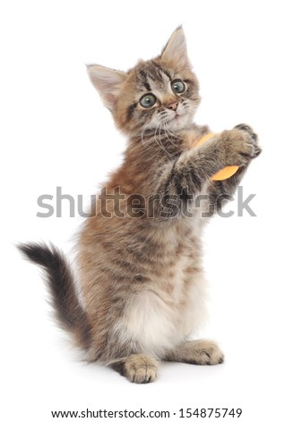 Little kitten playing with balls isolated on white - stock photo