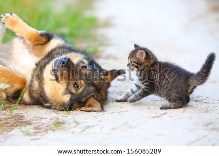 Little kitten playing with big dog - stock photo