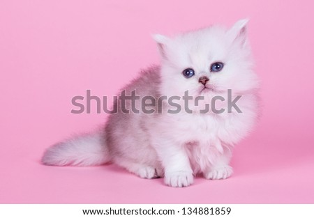 Little kitten portrait in studio