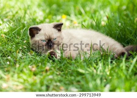 little kitten relaxing on the grass