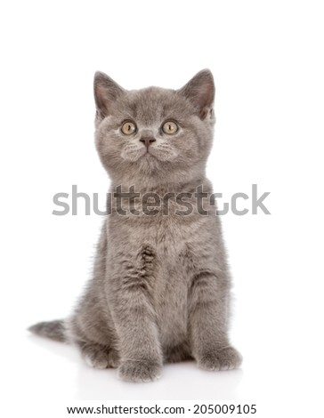 little kitten sitting in front and looking up. isolated on white background