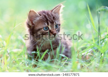 Little kitten sitting on the grass