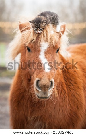 Little kitten sitting on the head of shetland pony - stock photo