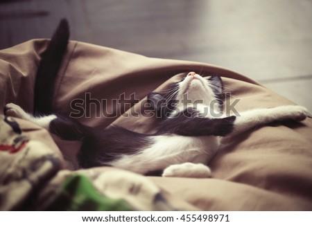little kitten sleeps  - stock photo