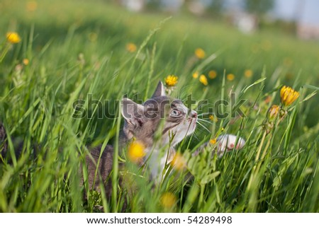 Little kitten walking in grass - stock photo