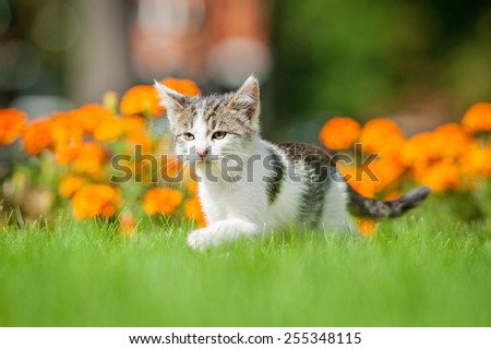 Little kitten walking on the lawn - stock photo