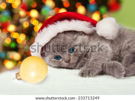 Little kitten wearing santa hat relaxing against Christmas tree with lights