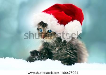 Little kitten wearing Santa's hat sitting in the snow - stock photo