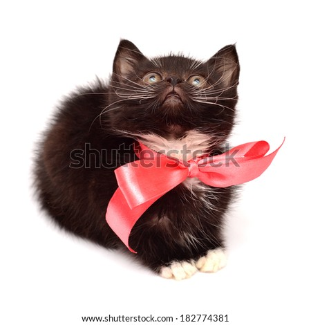 Little kitten with a bow isolated on white background