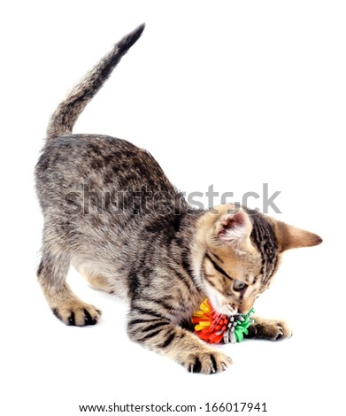 Little kitten with ball isolated on white - stock photo