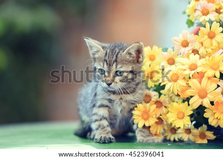 Little kitten with flowers in the garden