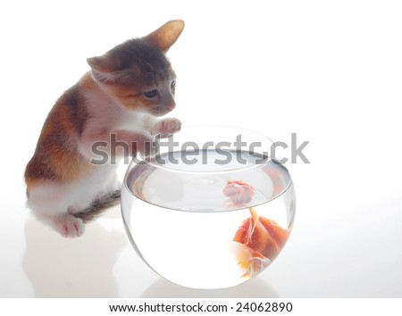 Little kitten with goldfish - stock photo