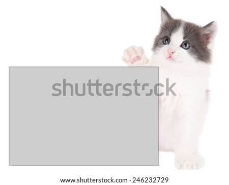 Little kitten with place for text isolated on white - stock photo
