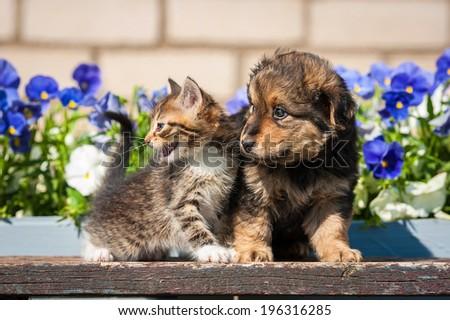 Little kitten with puppy outdoors - stock photo