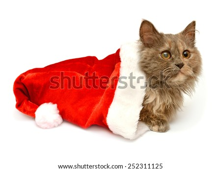 Little kitten with Santa Claus hat isolated on white background