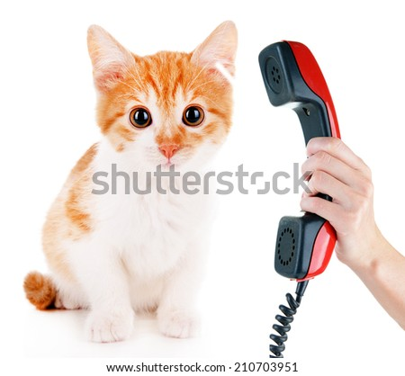 Little kitten with telephone receiver isolated on white - stock photo
