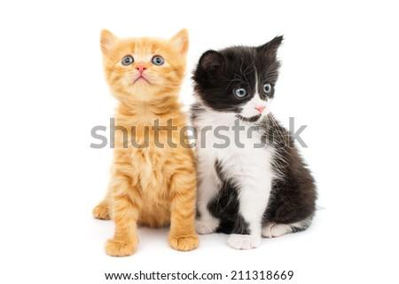 little kittens on white background - stock photo