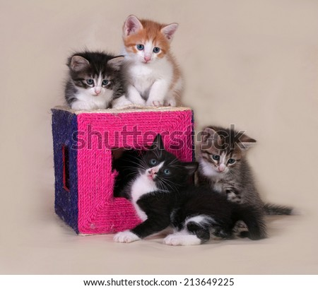 Little kittens sitting on and around scratching posts on gray background