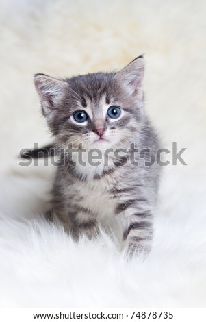 little kitty hunts - stock photo