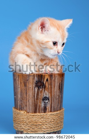 Little kitty in a bowl - stock photo