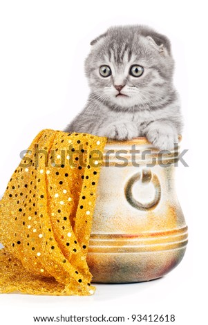 Little kitty in a bowl isolated on white - stock photo